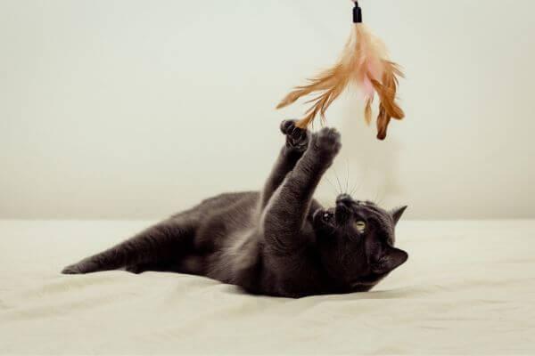 Comment jouer avec son chat