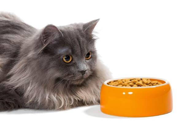 Croquettes selon pathologies du chat
