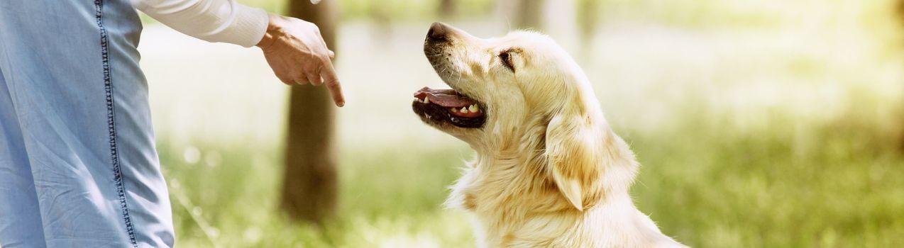 comment choisir un collier de dressage pour chien