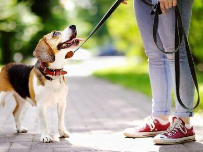comment éduquer son chien