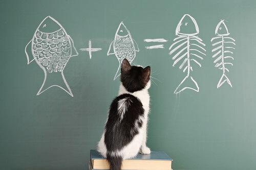 Les differents types de vermifuges pour chat