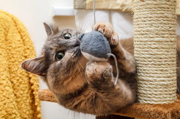Les fonctions de l'arbre a chat