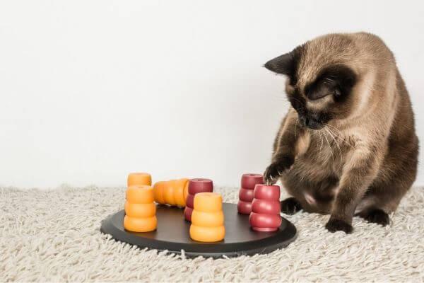 Les jeux pour chat