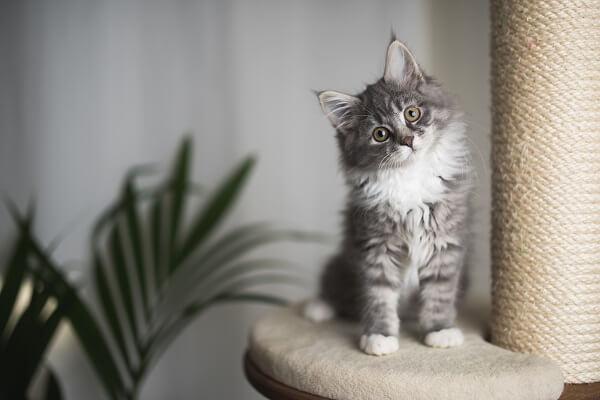 Les materiaux et la taille de l'arbre à chat