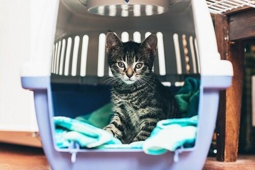 Les types de caisse de transport pour chat