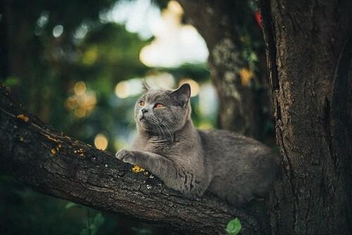 Les vermifuges chimiques pour chat