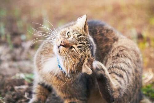 Parasites internes du chat