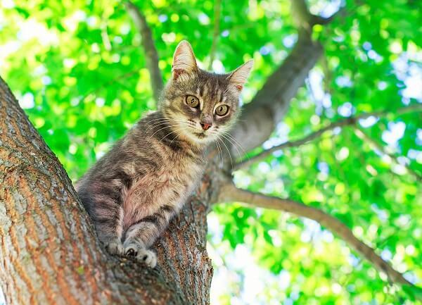 Pourquoi les chats aiments etre en hauteur