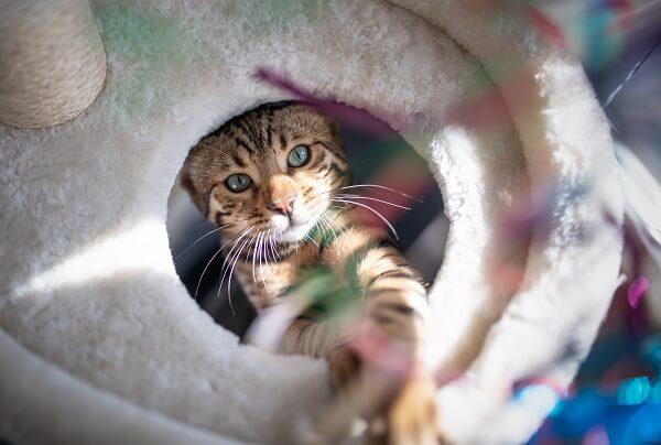 Pourquoi les chats aiments se cacher