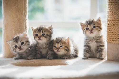 Quels antipuces choisir pour son chat