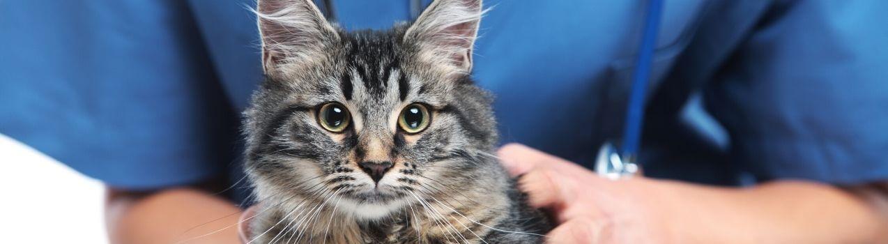 Quels traitements antipuces pour chat choisir