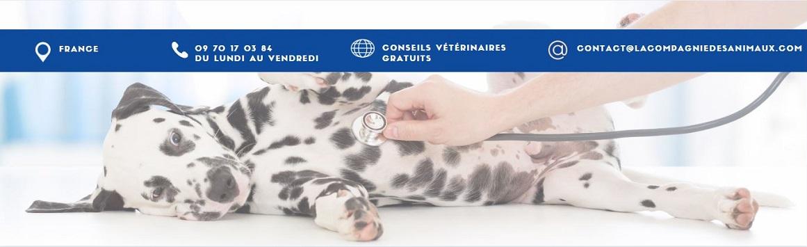 Conseils vétérinaires gratuits en ligne