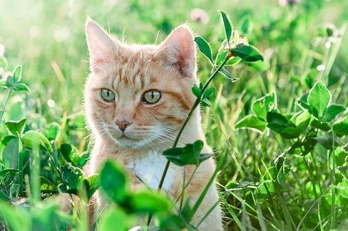 Tout savoir sur le tire tique pour chat