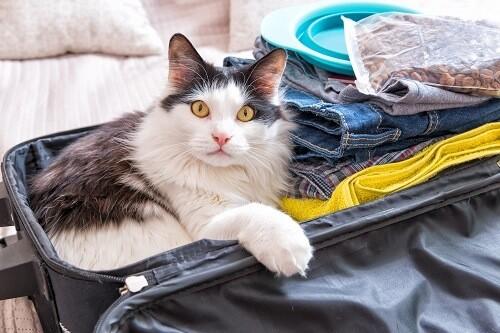Un voyage confort avec son chat