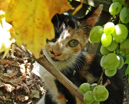 Vermifuges naturels pour chat