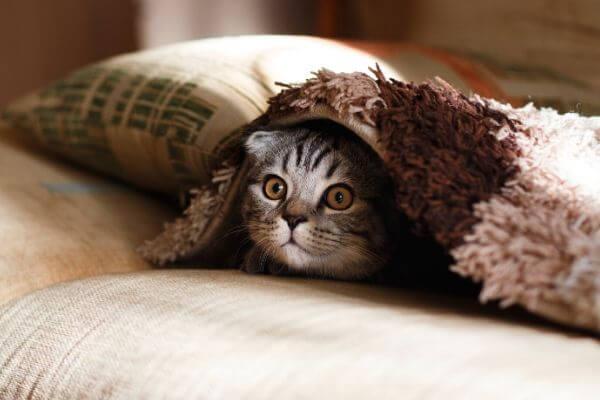 comment rassurer un chat stréssé