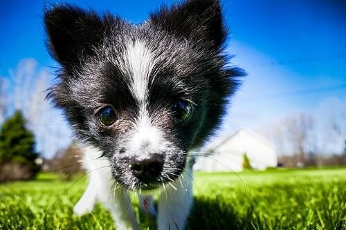 quels sont les differents antipuces pour chien
