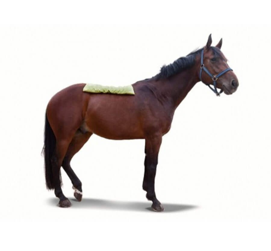 couverture calinobio natural care pour cheval xl accessoires de soins mat riel chevaux. Black Bedroom Furniture Sets. Home Design Ideas