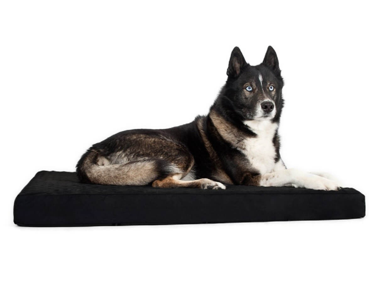 back on track matelas pour chien 100 120 cm livraison rapide. Black Bedroom Furniture Sets. Home Design Ideas