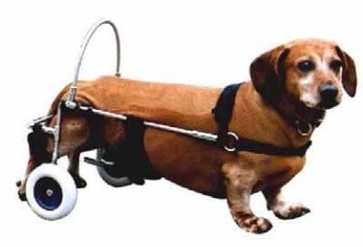 chariot canis mobile pour chien paralys du train arri re la compagnie des animaux. Black Bedroom Furniture Sets. Home Design Ideas