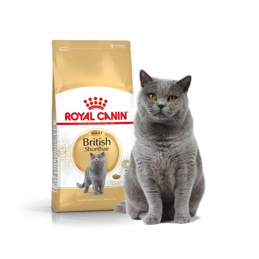 royal canin chat british shorthair adult 10 kg croquettes la compagnie des animaux. Black Bedroom Furniture Sets. Home Design Ideas
