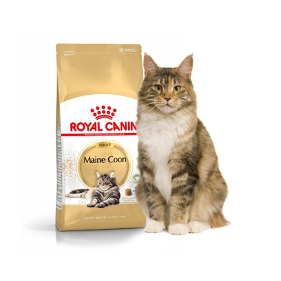 royal canin maine coon 31 10 kg la compagnie des animaux. Black Bedroom Furniture Sets. Home Design Ideas