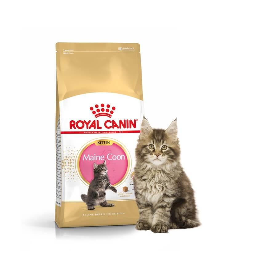 royal canin maine coon kitten 10 kg la compagnie des animaux. Black Bedroom Furniture Sets. Home Design Ideas