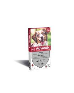 Advantix chien moyen (10 - 25 kg) - 4 pipettes- La Compagnie des Animaux