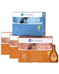 Dermoscent Essential 6 Chien de 20 à 40kg - 4 pipettes- La Compagnie des Animaux
