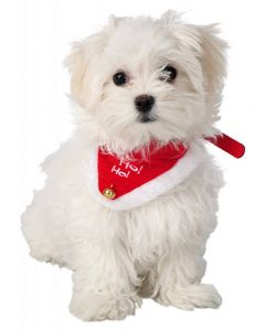 Trixie Collier Necki avec bandana pour chiens et chats taille M/L - La Compagnie des Animaux