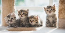 Anti-Puces et Vermifuges pour Chaton | Décryptage de nos Vétérinaires