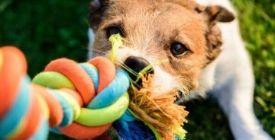Quels jouets choisir pour mon chien ? | Guide 100% Veto