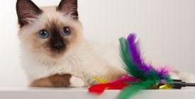 Quels jouets choisir pour mon chat ? | Guide 100% Veto