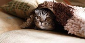 Comment réduire le stress du chat ? | Guide 100% Véto