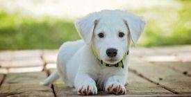 Anti-Puces et Vermifuges pour Chiot | Nos Conseils Vétérinaires
