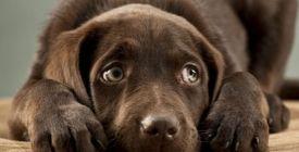 Les Solutions Anti-Stress pour Chien | Guide 100% Vétérinaire