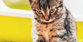 Marquage Urinaire du Chat | Pourquoi mon chat fait pipi partout ?