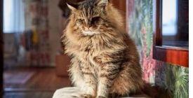 Comment entretenir le pelage du chat | Guide 100% Véto