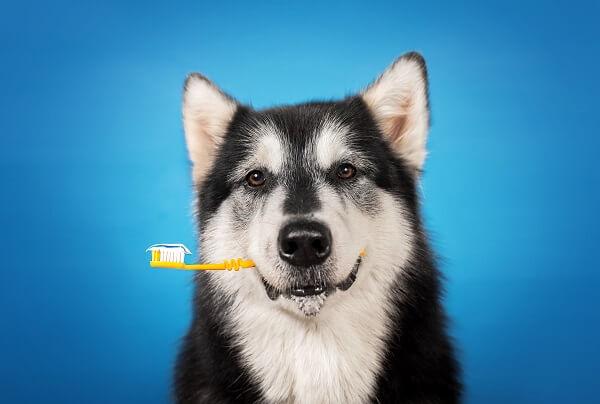 Dentifrice naturel pour chien - Comment bien nettoyer les dents de son chien ?