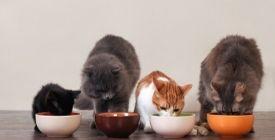 Gamelle et Fontaine pour Chat | Comment bien les choisir ?