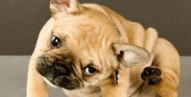 Les antiparasitaires externes pour chien - Antipuces et Anti-tiques
