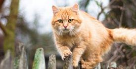Comment sortir son chat en toute sécurité | Colliers et Filets