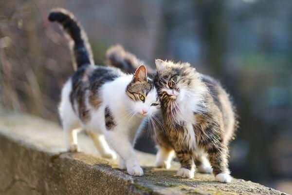 Phéromones pour chats : Quelle phéromone choisir pour son chat stressé ?