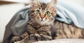 Traiter son chat contre les Vers | Les Vermifuges pour Chat