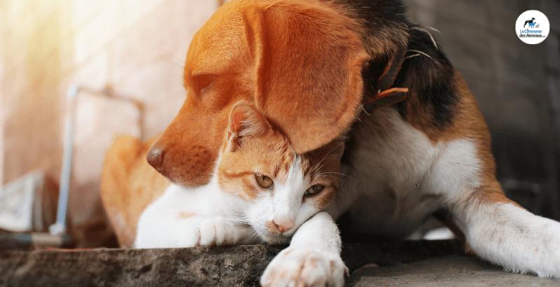 Les idées reçues sur la stérilisation du chien et du chat