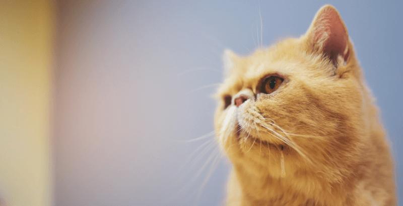 Mon chat bave : dois-je m'inquiéter ?