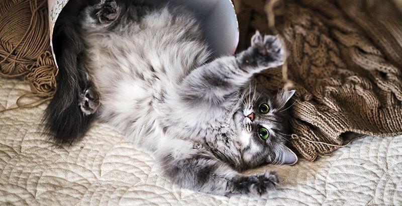 Comment prendre soin des coussinets de son animal ?