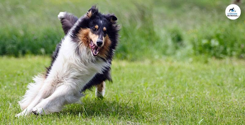 Comment conserver l'aspect jeune de votre vieux chien ?
