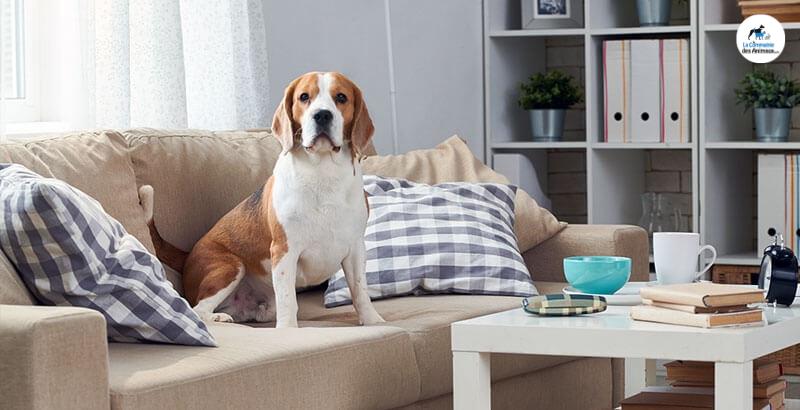 Quelles activités intérieures proposer à son chien ?