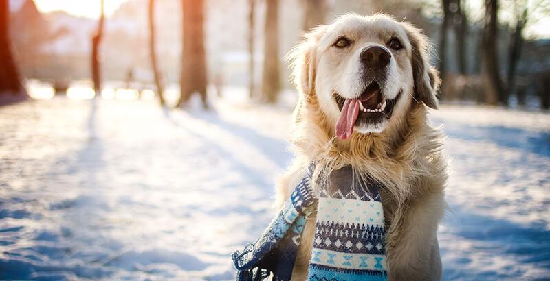 Comment renforcer les défenses immunitaires de son animal avant l'hiver ?